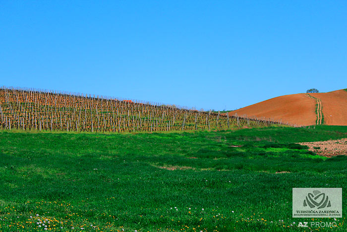Daruvar vineyards