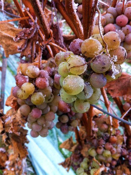 Vnouček winery