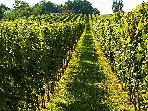 Bilogora wine road